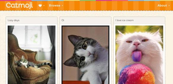 Catmoji kedi sosyal ağ sosyal medya